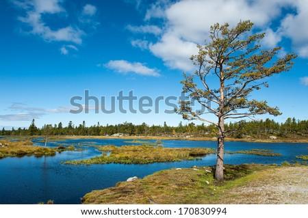 Norwegian landscape. - stock photo