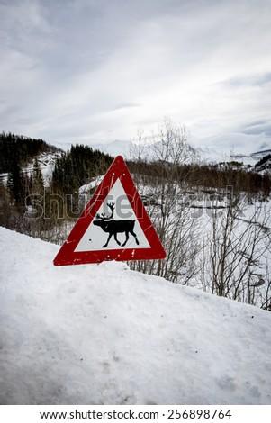 Norwegian reindeer warning road sign - stock photo