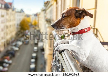 nosy watching dog form top of balcony - stock photo