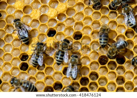 Not capped brood cells of the honey bee (Apis mellifera) - stock photo