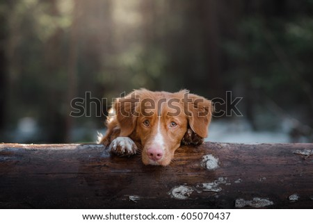 Dog Bring Stock Images RoyaltyFree Images  Vectors  Shutterstock
