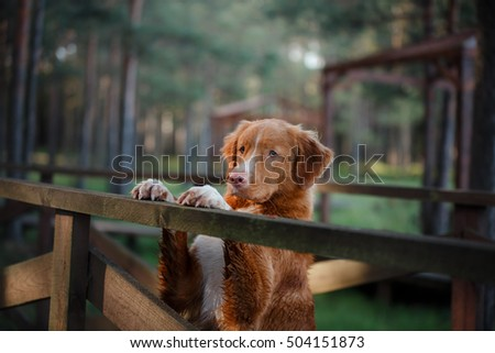 Paws Forward Stock Photos RoyaltyFree Images  Vectors