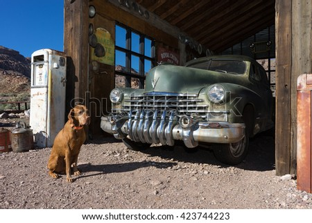 November 9, 2015 Nelson, Nevada: tourist dog posing in the front of a vintage car parked in an old building in the abandoned mining town