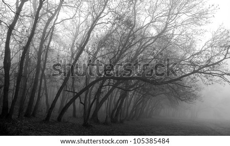 November scenery in the forest with morning fog and rusty grass