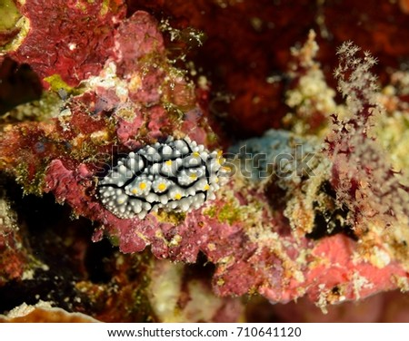 nudibranchia underwater world
