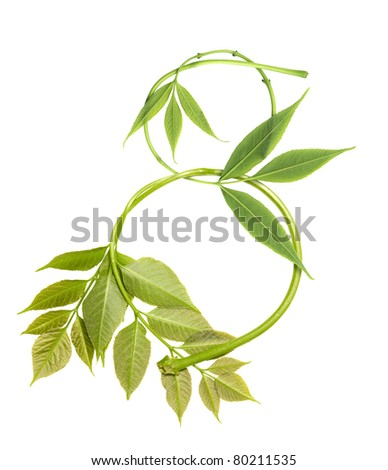 Number eight from branches and green leaves isolated on white