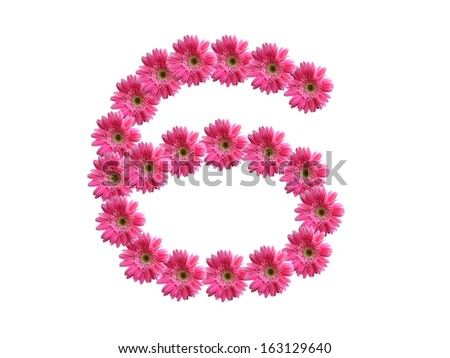 Number 6 from pink gerbera flowers alphabet isolated on white background - stock photo