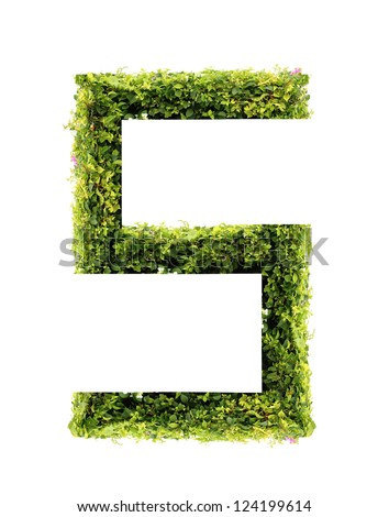 Number 5 green leaves on white background - stock photo