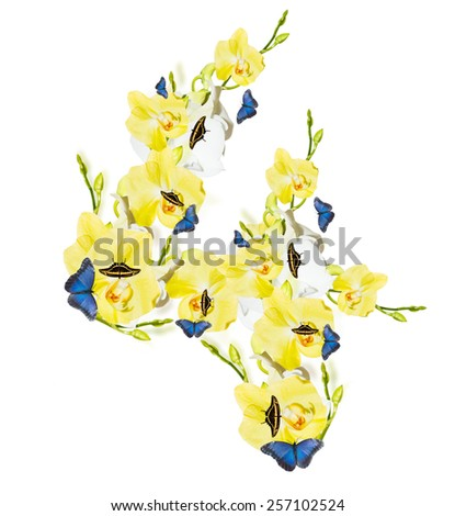 Number 4 orchid and butterfly,  spring isolated on white background - stock photo