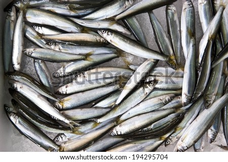 Numerous silver fish piled on top of each other. - stock photo