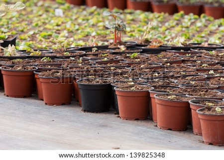 Nursery of flowers and plants for garden in greenhouse