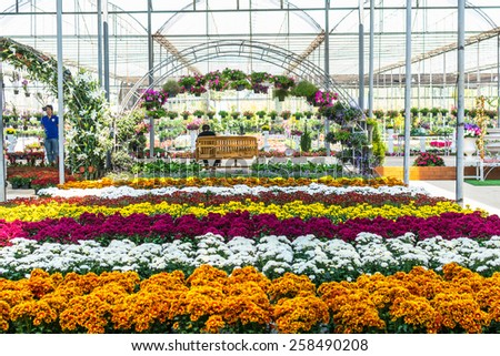 nursery of flowers and plants for garden in greenhouse. - stock photo