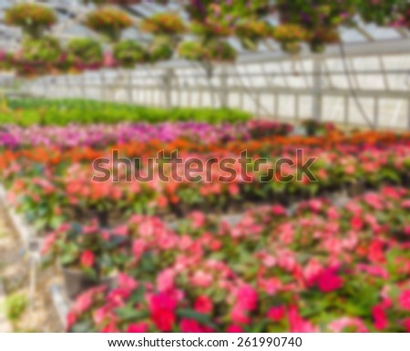 nursery of flowers and plants for garden in greenhouse, abstract blur background - stock photo