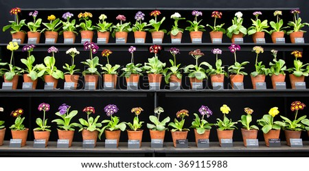 Nursery Plants on show in a line - stock photo