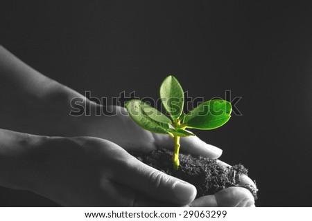 Nurturing new growth - stock photo