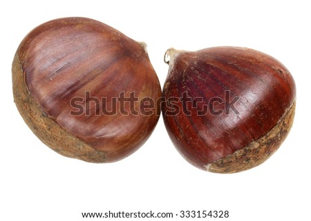 Nut of a chestnut it is isolated on a white background