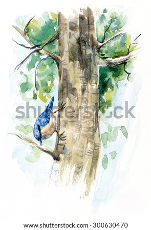 Nuthatch on the tree. Decoration with wildlife scene. Watercolor hand drawing illustration.  - stock photo