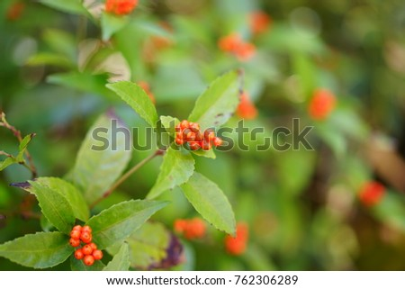 https://thumb1.shutterstock.com/display_pic_with_logo/167494286/762306289/stock-photo-nuts-in-a-garden-762306289.jpg