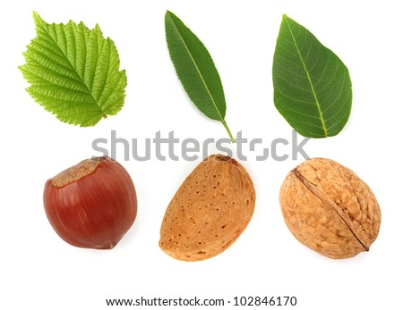 Nuts with leaves - stock photo