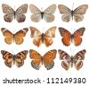 nymphalid butterfly with white background - stock photo