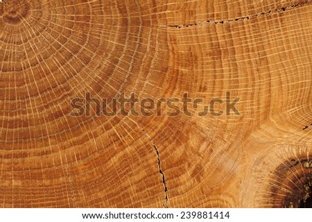 Oak board with growth rings close up - stock photo