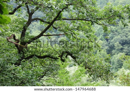 Oak branches completely filling the frame - stock photo