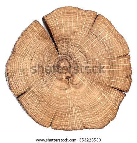 Oak cracked split with growth rings isolated - stock photo