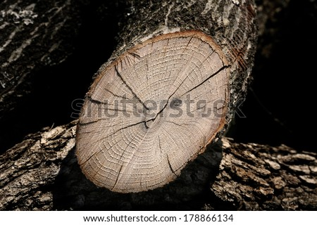 Oak cut log - stock photo