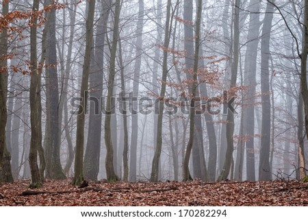 Oak forest at the autumntime - stock photo
