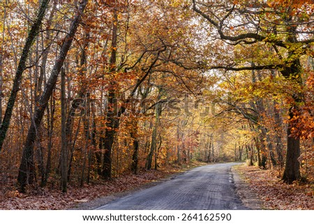 Oak forest with warm autumn tones in november - stock photo