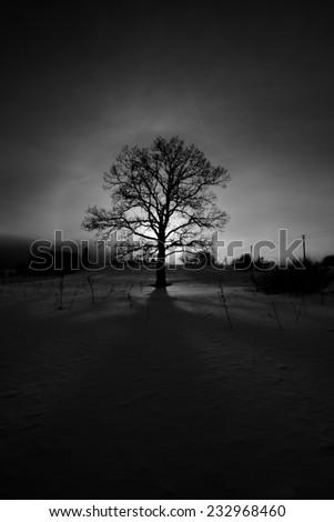 Oak in backlight - stock photo