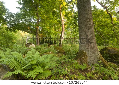 Oak in �¥holmen, v�¤stmanland, Sweden, habitat for many rare insects, fern in the foreground - stock photo