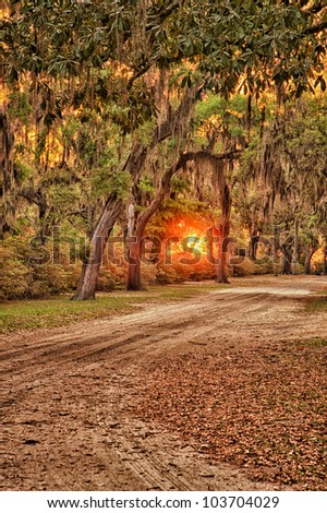 Oak lane with Spanish moss hanging from trees in the low country of South Carolina