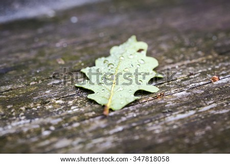 oak leaf  with morning dew on an old table - stock photo