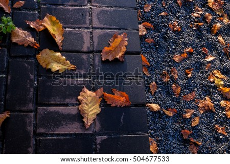 oak leaves on the pavement