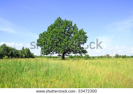 oak on field