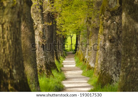 oak tree alley with footpath in Bavaria - stock photo