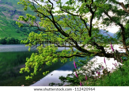 Oak Tree and Foxgloves by a Lake