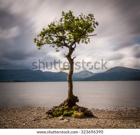 Oak Tree at Loch Lomond, Scotland - stock photo