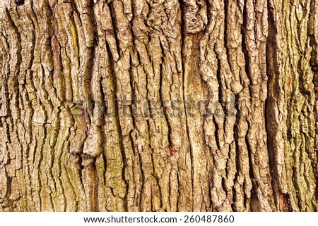 Oak tree bark, texture - stock photo