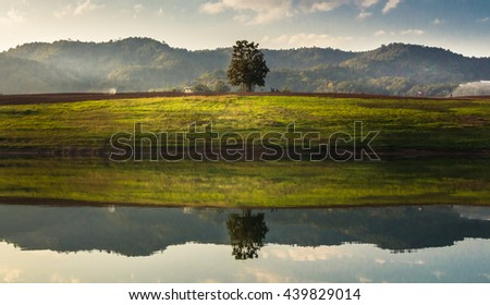 Oak tree in full leaf in summer in a field, with reflection over rippled water, against a clear. - stock photo