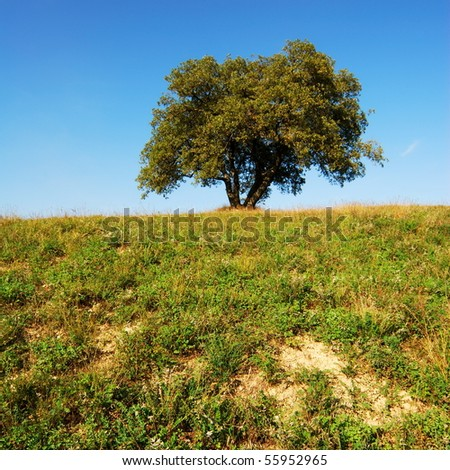 Oak tree in green field under deep blue sky - stock photo