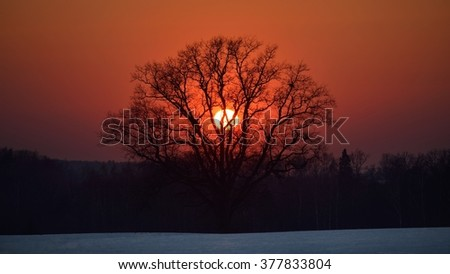 Oak tree in the field against the setting sun - stock photo