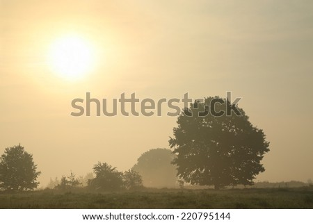 Oak tree on a misty morning at the beginning of autumn. - stock photo