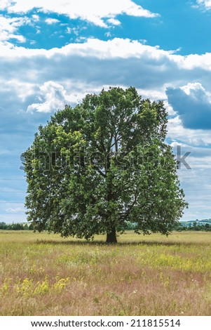 oak tree solitary in the field - stock photo