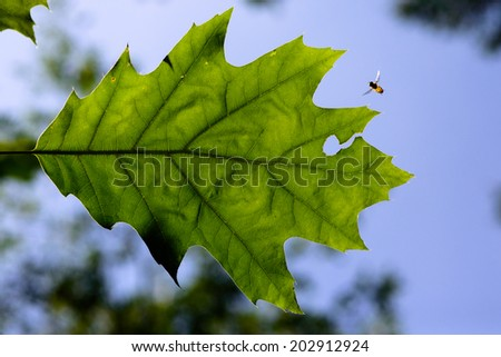 Oak tree with a insect - stock photo