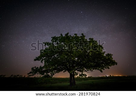 Oak tree with green leaves on a background of the night sky and the Milky Way. - stock photo