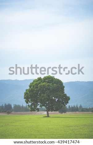 Oak tree with new leaf growth in early spring standing alone in a field, dog standing next to it on a cloudy sky, image filtered vintage - stock photo