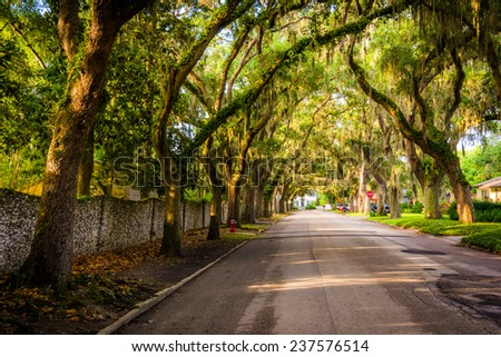 Oak trees along Magnolia Avenue in St. Augustine, Florida. - stock photo