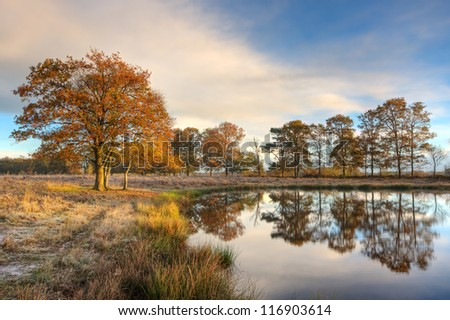 Oak trees in on an early morning in autumn, reflected in a lake, Soft rush on the shore